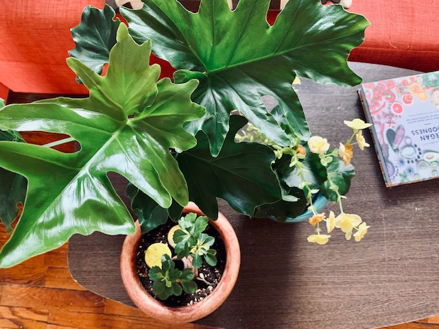 Take care of your plants in summer: tips to survive theheat