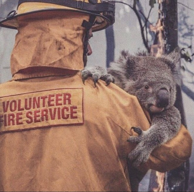 Australia wildfires: how to help those inneed
